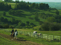 Hacking in the Cotswolds
